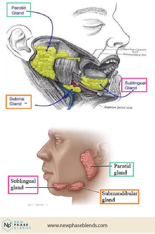 an image of the sublingual vein